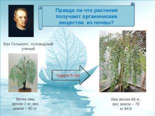 Ветка ивы весом 2 кг, вес земли – 80 кг Ван Гельмонт, голландский ученый Ива вес