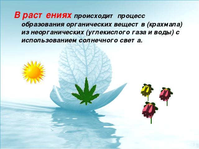 В растениях происходит процесс образования органических веществ (крахмала) из неорганических (углекислого газа и воды) с использованием солнечного света.