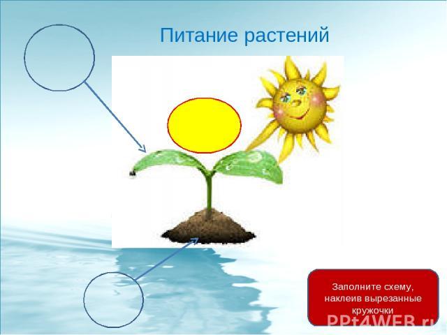 Питание растений Заполните схему, наклеив вырезанные кружочки