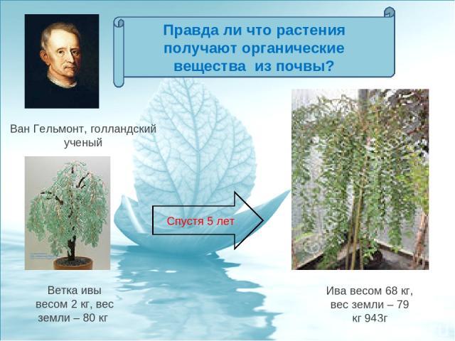Ветка ивы весом 2 кг, вес земли – 80 кг Ван Гельмонт, голландский ученый Ива весом 68 кг, вес земли – 79 кг 943г Спустя 5 лет Правда ли что растения получают органические вещества из почвы?