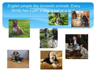 English people like domestic animals. Every family has a pet: a dog, a cat or a