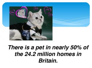 Fact File There is a pet in nearly 50% of the 24.2 million homes in Britain.