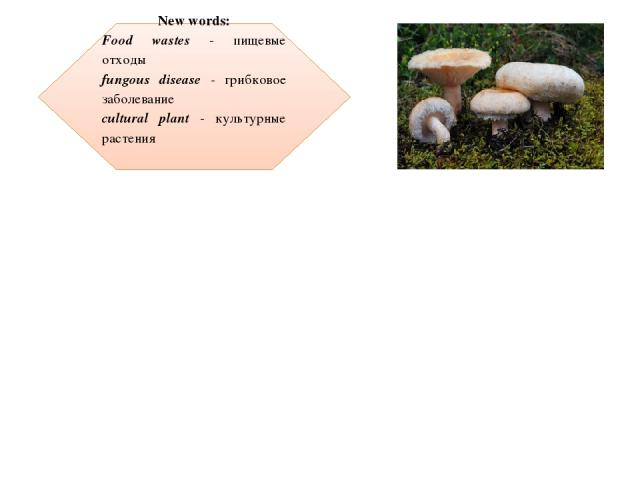 New words: Food wastes - пищевые отходы fungous disease - грибковое заболевание cultural plant - культурные растения     Mushrooms can grow on food wastes, paper, wood buildings and wet clothes. Fungous diseases cause harm and even kill plants, incl…