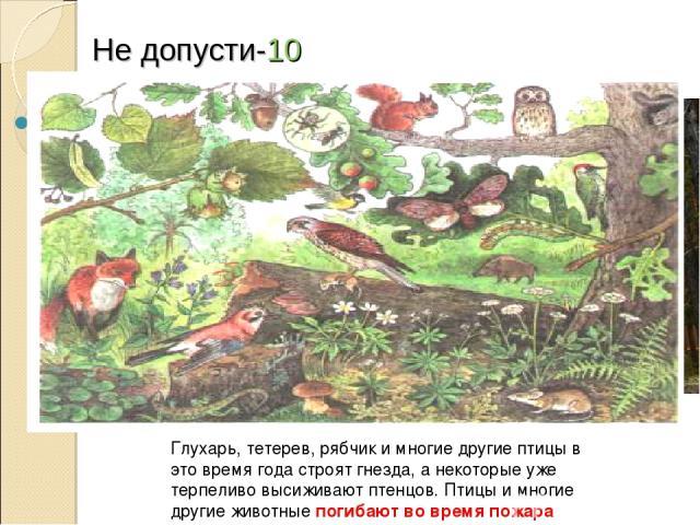Не допусти-10 Какой непоправимый ущерб природе наносит пожар в весенний период? Глухарь, тетерев, рябчик и многие другие птицы в это время года строят гнезда, а некоторые уже терпеливо высиживают птенцов. Птицы и многие другие животные погибают во в…