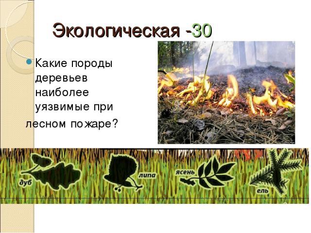 Экологическая -30 Какие породы деревьев наиболее уязвимые при лесном пожаре?