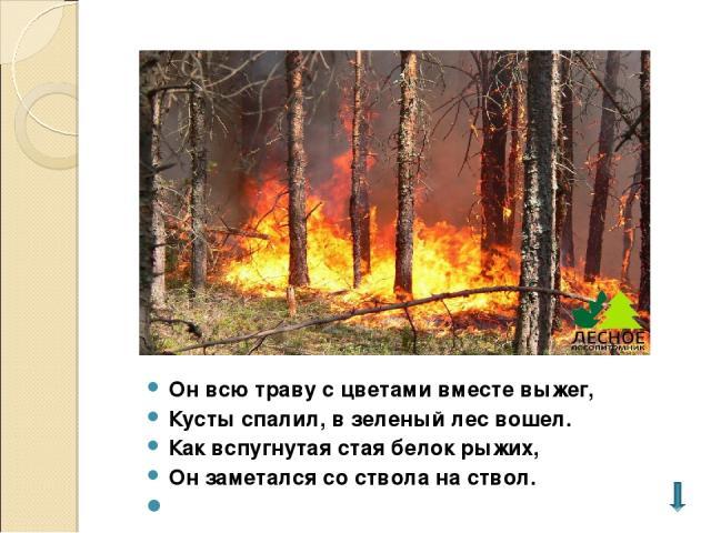 Он всю траву с цветами вместе выжег, Кусты спалил, в зеленый лес вошел. Как вспугнутая стая белок рыжих, Он заметался со ствола на ствол.