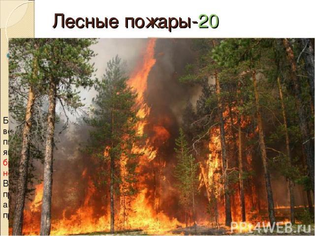 Лесные пожары-20 Какое отношение к пожарам имеет курящий человек ? Большинство пожаров возникает в местах пикников, сбора грибов и ягод, во время охоты, от брошенной горящей спички, непотушенной сигареты. Выброшенная сигарета из проезжающего поезда,…