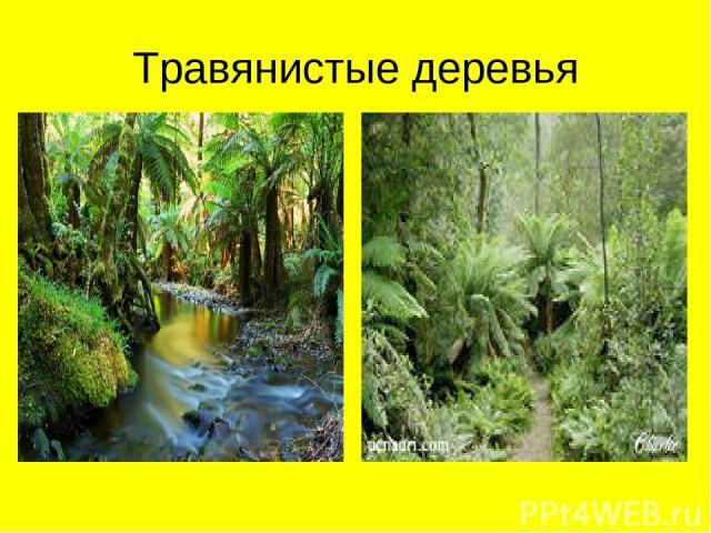 Травянистые деревья