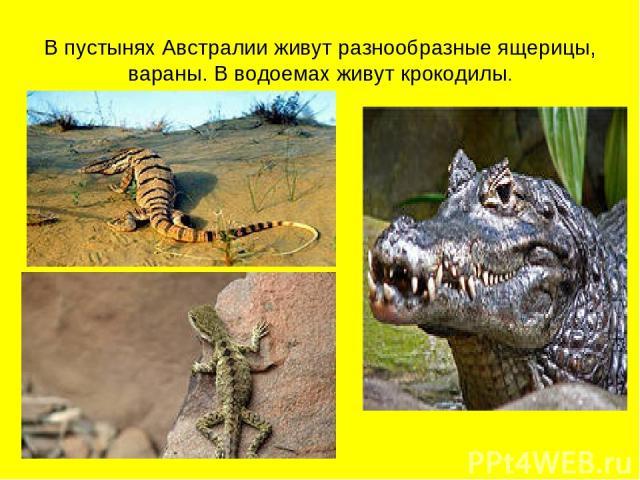 В пустынях Австралии живут разнообразные ящерицы, вараны. В водоемах живут крокодилы.