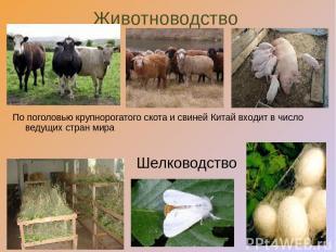 Животноводство Шелководство По поголовью крупнорогатого скота и свиней Китай вхо