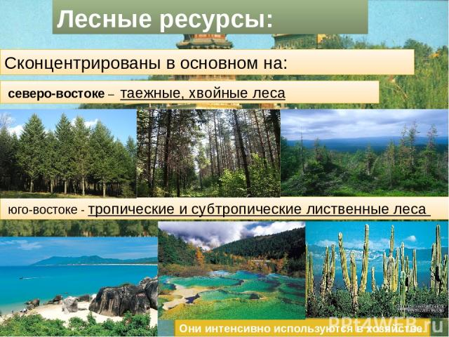 Лесные ресурсы: Сконцентрированы в основном на: северо-востоке – таежные, хвойные леса юго-востоке - тропические и субтропические лиственные леса Они интенсивно используются в хозяйстве.