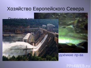 Хозяйство Европейского Севера Природные ресурсы Нефть, газ, уголь Руды металлов