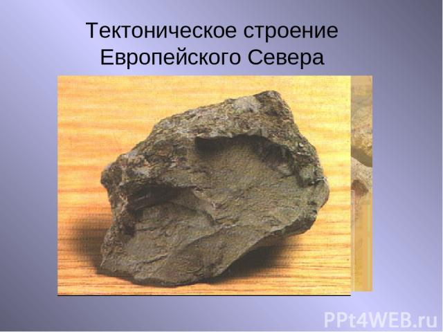 Тектоническое строение Европейского Севера Выступ кристаллического фундамента Осадочные чехлы платформ Магматические горные породы Осадочные горные породы