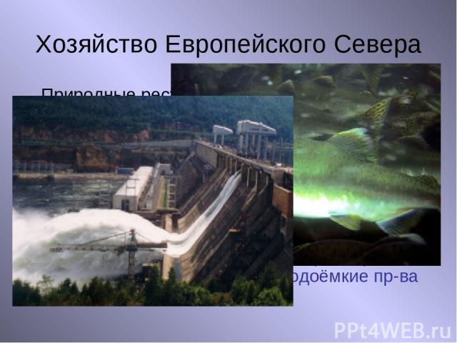 Хозяйство Европейского Севера Природные ресурсы Нефть, газ, уголь Руды металлов Апатиты Мрамор, гранит Лесные ресурсы Рыбные ресурсы Водные ресурсы Отрасли хозяйства Топливная пр-ть Металлургия Пр-во удобрений Строительная пр-ть Лесная пр-ть Рыбная …