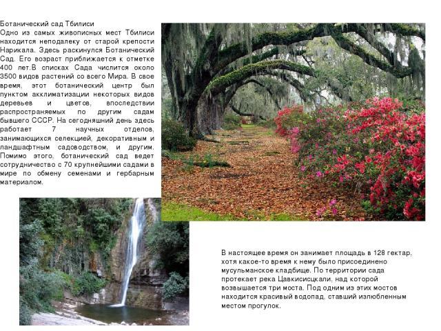 Ботанический сад Тбилиси Одно из самых живописных мест Тбилиси находится неподалеку от старой крепости Нарикала. Здесь раскинулся Ботанический Сад. Его возраст приближается к отметке 400 лет.В списках Сада числится около 3500 видов раст…