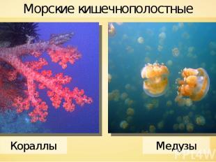 Морские кишечнополостные Кораллы Медузы