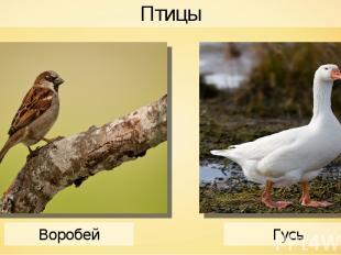 Птицы Воробей Гусь