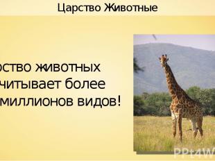 Hok Царство животных насчитывает более 2,5 миллионов видов! Царство Животные