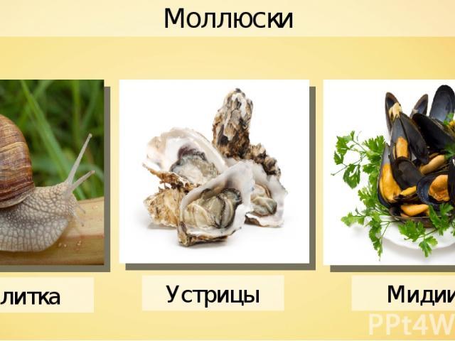 Моллюски Улитка Мидии Устрицы