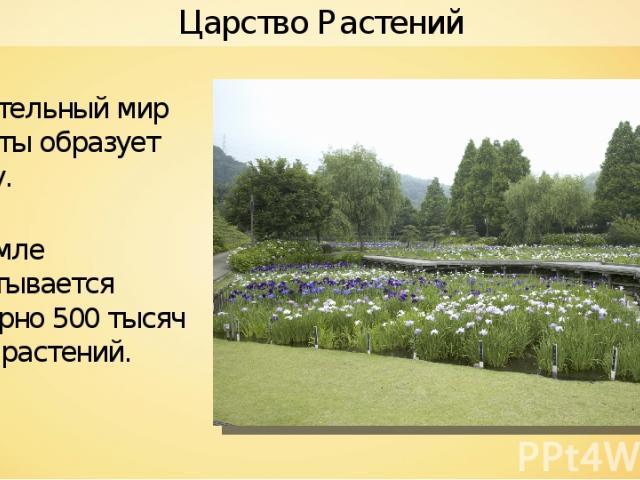Растительный мир планеты образует флору. На Земле насчитывается примерно 500 тысяч видов растений. Царство Растений