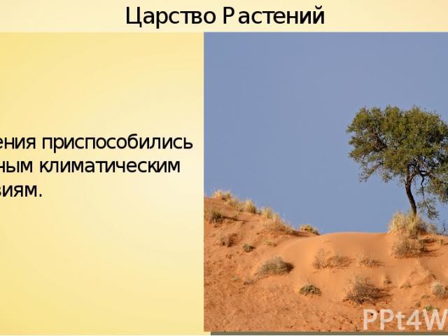 Растения приспособились к разным климатическим условиям. Царство Растений