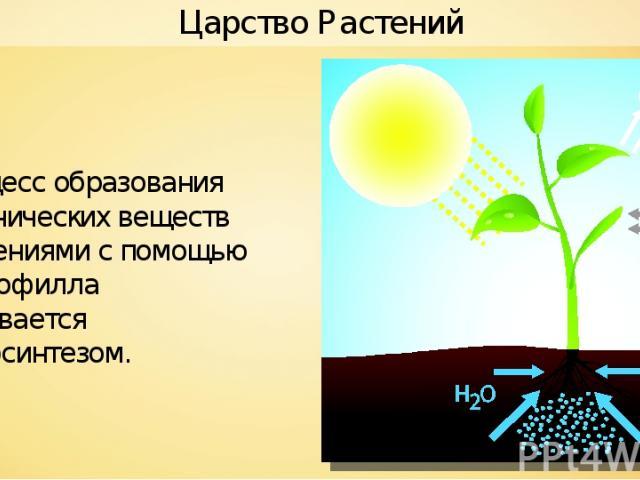 Процесс образования органических веществ растениями с помощью хлорофилла называется фотосинтезом. Царство Растений