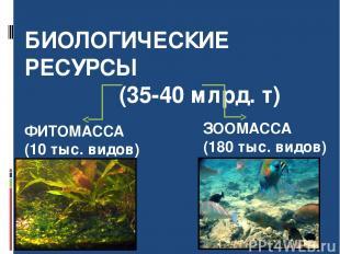 БИОЛОГИЧЕСКИЕ РЕСУРСЫ (35-40 млрд. т) ФИТОМАССА (10 тыс. видов) ЗООМАССА (180 ты