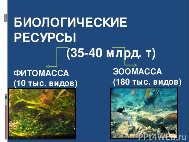 БИОЛОГИЧЕСКИЕ РЕСУРСЫ (35-40 млрд. т) ФИТОМАССА (10 тыс. видов) ЗООМАССА (180 тыс. видов)