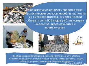 Значительную ценность представляют биологические ресурсы морей, в частности их р