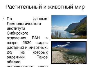 Растительный и животный мир По данным Лимнологического института Сибирского отде