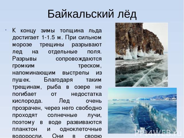 Байкальский лёд К концу зимы толщина льда достигает 1-1.5 м. При сильном морозе трещины разрывают лед на отдельные поля. Разрывы сопровождаются громким треском, напоминающим выстрелы из пушек. Благодаря таким трещинам, рыба в озере не погибает от не…