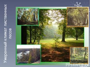 Умеренный климат лиственных лесов