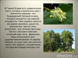 В Горной Шории есть удивительное место, которое сохранилось ещё с третичного пер
