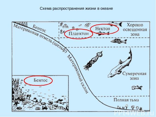 Схема распространения жизни в океане