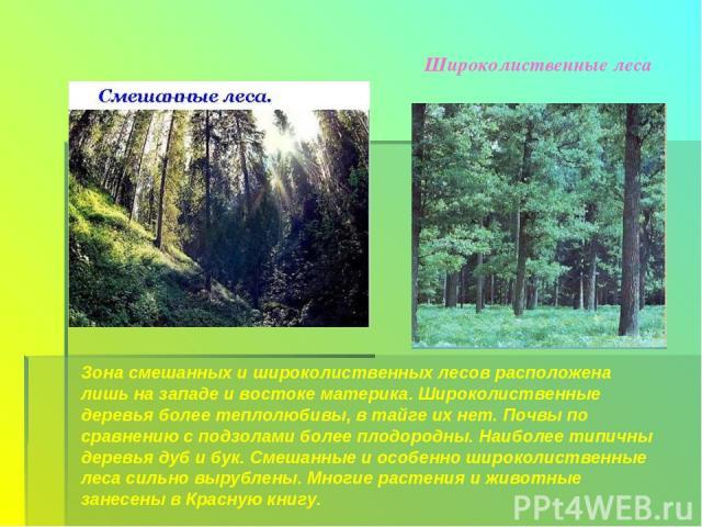 Широколиственные леса Зона смешанных и широколиственных лесов расположена лишь на западе и востоке материка. Широколиственные деревья более теплолюбивы, в тайге их нет. Почвы по сравнению с подзолами более плодородны. Наиболее типичны деревья дуб и …