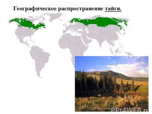 Географическое распространение тайги.