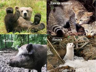 Дикая кошка Кабан Ласка