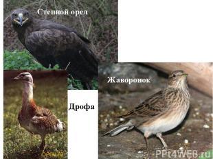 Степной орел Жаворонок Дрофа