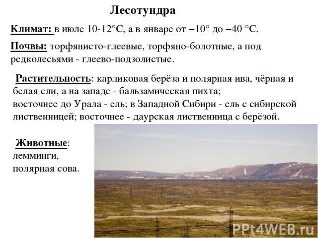 Лесотундра Животные: лемминги, полярная сова. Растительность: карликовая берёза и полярная ива, чёрная и белая ели, а на западе - бальзамическая пихта; восточнее до Урала - ель; в Западной Сибири - ель с сибирской лиственницей; восточнее - даурская …