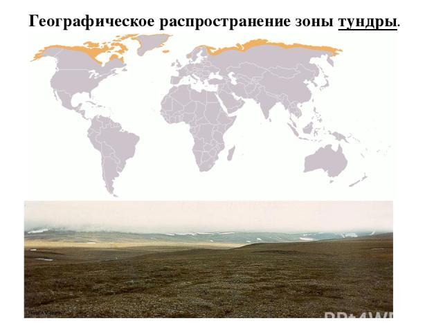 Географическое распространение зоны тундры.