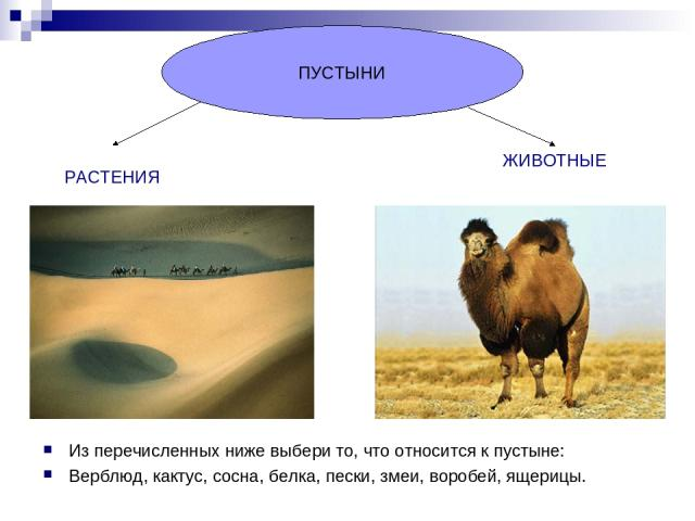 Из перечисленных ниже выбери то, что относится к пустыне: Верблюд, кактус, сосна, белка, пески, змеи, воробей, ящерицы. ПУСТЫНИ РАСТЕНИЯ ЖИВОТНЫЕ
