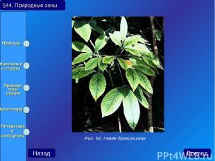 §44. Природные зоны Назад Вперед Рис. 54. Гевея бразильская Природа Население и