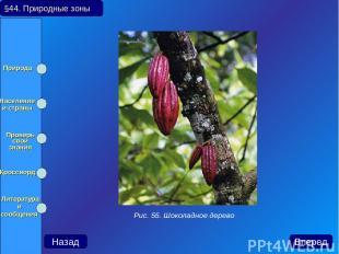 Назад Вперед Рис. 55. Шоколадное дерево §44. Природные зоны Природа Население и