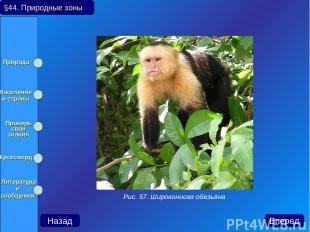 §44. Природные зоны Назад Вперед Рис. 57. Широконосая обезьяна Природа Население