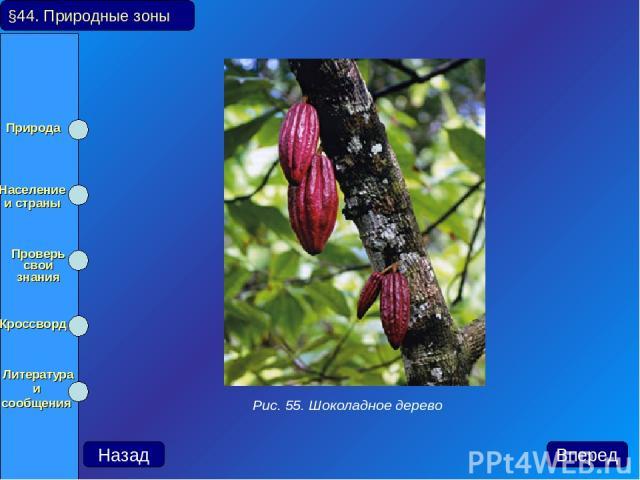 Назад Вперед Рис. 55. Шоколадное дерево §44. Природные зоны Природа Население и страны Проверь свои знания Кроссворд Литература и сообщения