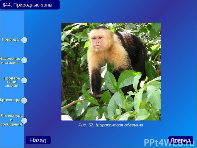 §44. Природные зоны Назад Вперед Рис. 57. Широконосая обезьяна Природа Население и страны Проверь свои знания Кроссворд Литература и сообщения