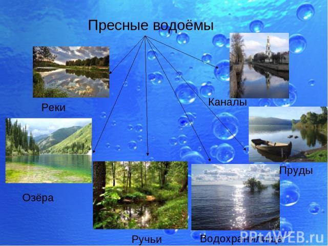Реки Озёра Ручьи Каналы Пруды Водохранилища Пресные водоёмы