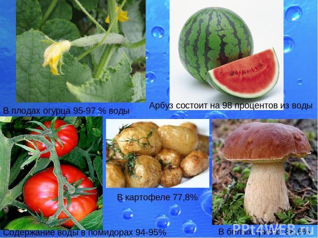 В плодах огурца 95-97% воды Арбуз состоит на 98 процентов из воды Содержание воды в помидорах 94-95% В картофеле 77,8% В белых грибах 88,6%