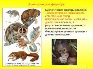 Биологические факторы Биологические факторы эволюции – наследственная изменчивос