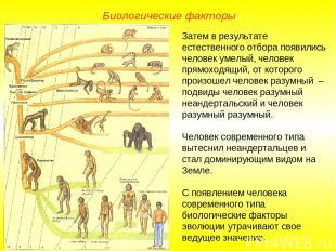 Затем в результате естественного отбора появились человек умелый, человек прямох